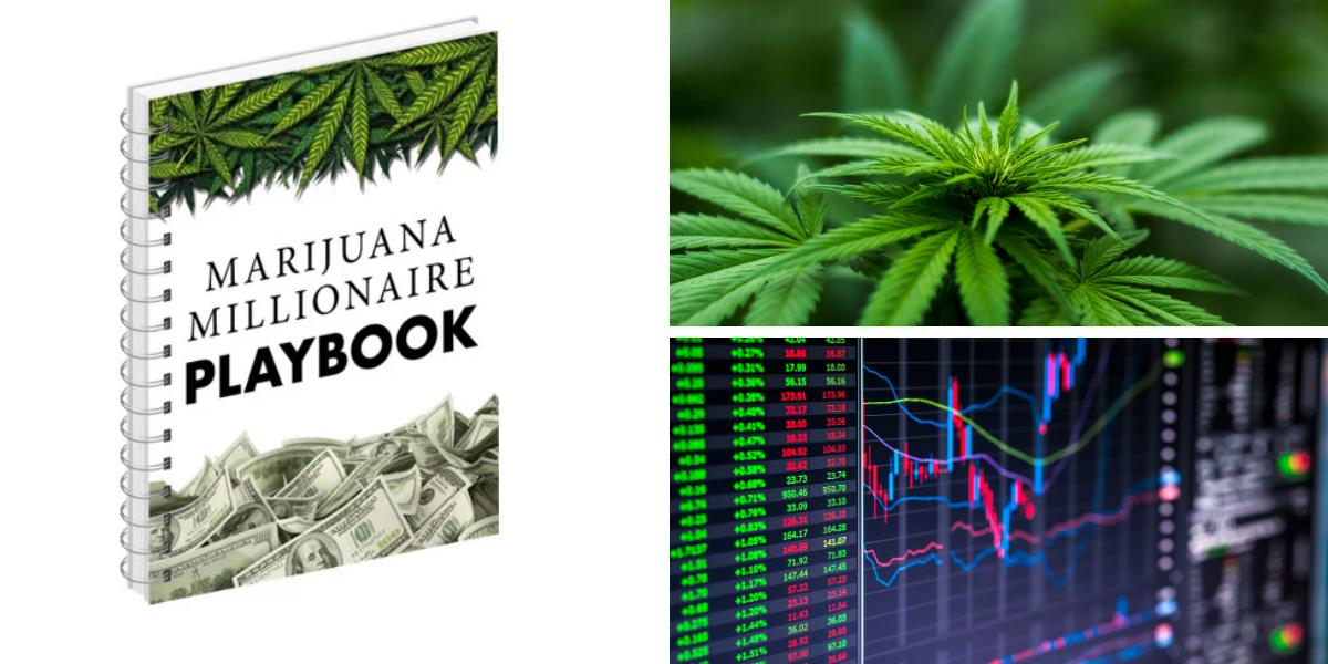 Marijuana Millionaire Playbook Scam
